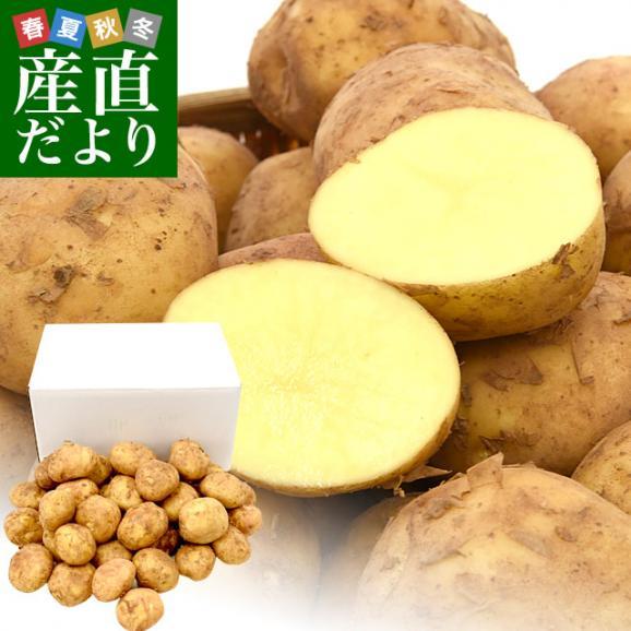 送料無料 鹿児島県産 JA鹿児島いずみ 赤土ばれいしょ 新じゃが ニシユタカ Lサイズ 約5キロ 馬鈴薯 市場スポット01