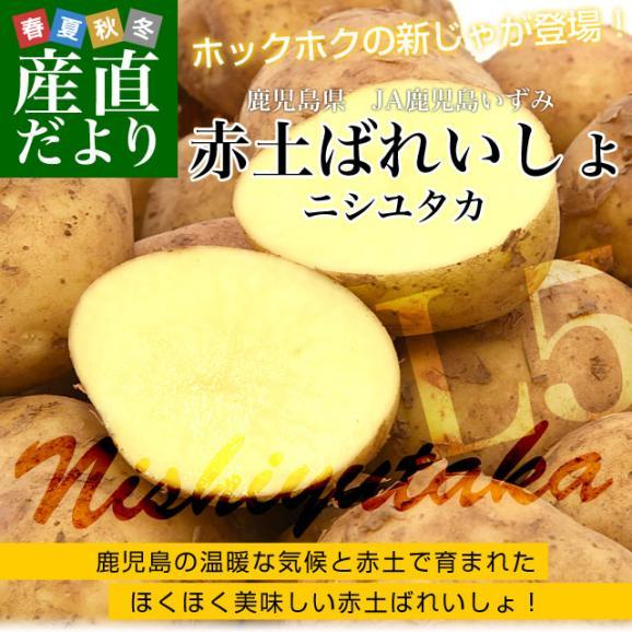 送料無料 鹿児島県産 JA鹿児島いずみ 赤土ばれいしょ 新じゃが ニシユタカ Lサイズ 約5キロ 馬鈴薯 市場スポット02