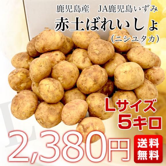 送料無料 鹿児島県産 JA鹿児島いずみ 赤土ばれいしょ 新じゃが ニシユタカ Lサイズ 約5キロ 馬鈴薯 市場スポット03