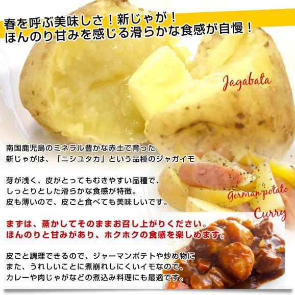 送料無料 鹿児島県産 JA鹿児島いずみ 赤土ばれいしょ 新じゃが ニシユタカ Lサイズ 約5キロ 馬鈴薯 市場スポット05
