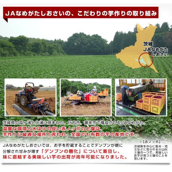 送料無料 茨城県より産地直送 JAなめがたしおさい さつまいも「熟成紅こがね」 SからSSサイズ 約1キロ(5本から10本)3箱セット04