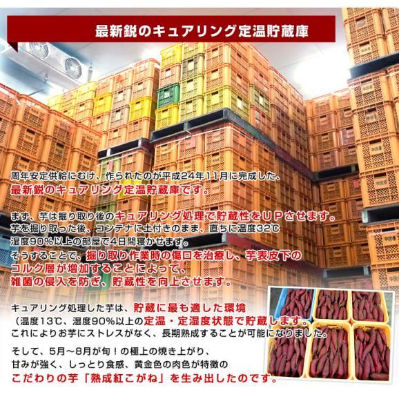 送料無料 茨城県より産地直送 JAなめがたしおさい さつまいも「熟成紅こがね」 SからSSサイズ 約1キロ(5本から10本)3箱セット05