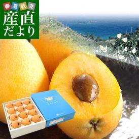 送料無料 長崎県より産地直送 JA長崎せいひ 長崎びわ なつたより 秀品 約1キロ 化粧箱(12から15粒)