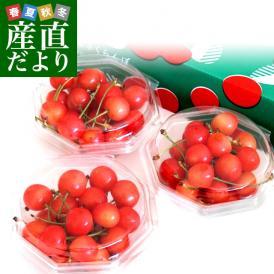 とっても希少な温室ハウス栽培のさくらんぼ「佐藤錦」
