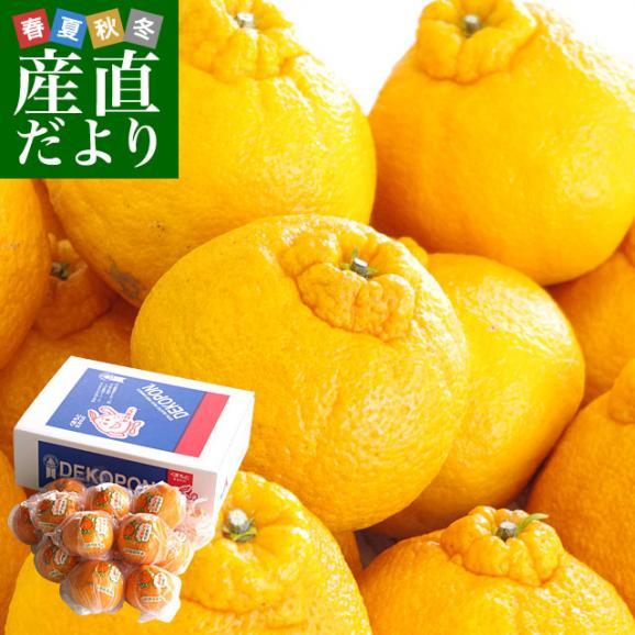 送料無料 熊本県産 JA熊本果実連 貯蔵デコポン 2LからL 3キロ(12玉から15玉) Pプラス鮮度保持袋入り 市場スポット01
