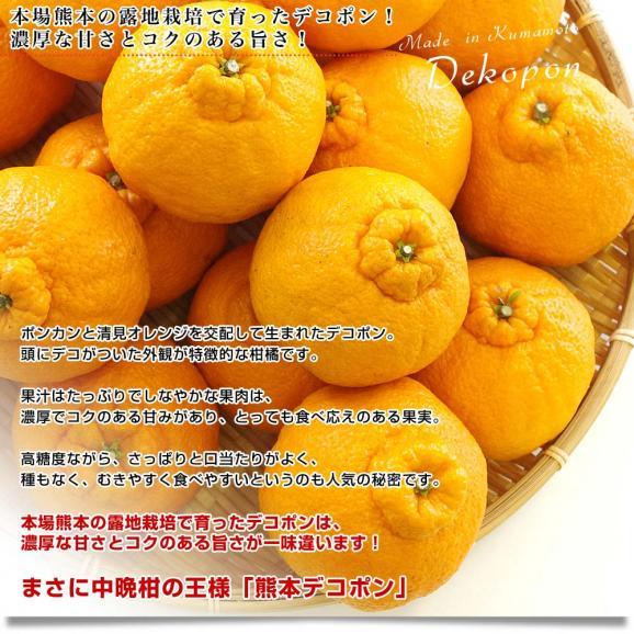 送料無料 熊本県産 JA熊本果実連 貯蔵デコポン 2LからL 3キロ(12玉から15玉) Pプラス鮮度保持袋入り 市場スポット04