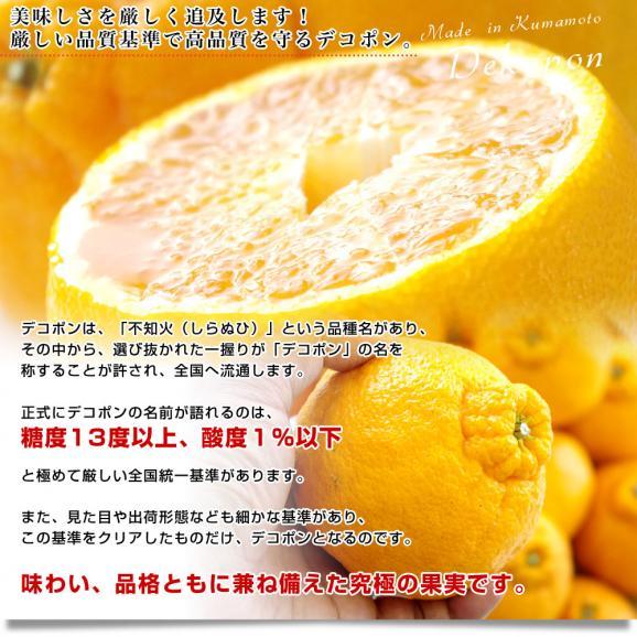 送料無料 熊本県産 JA熊本果実連 貯蔵デコポン 2LからL 3キロ(12玉から15玉) Pプラス鮮度保持袋入り 市場スポット05
