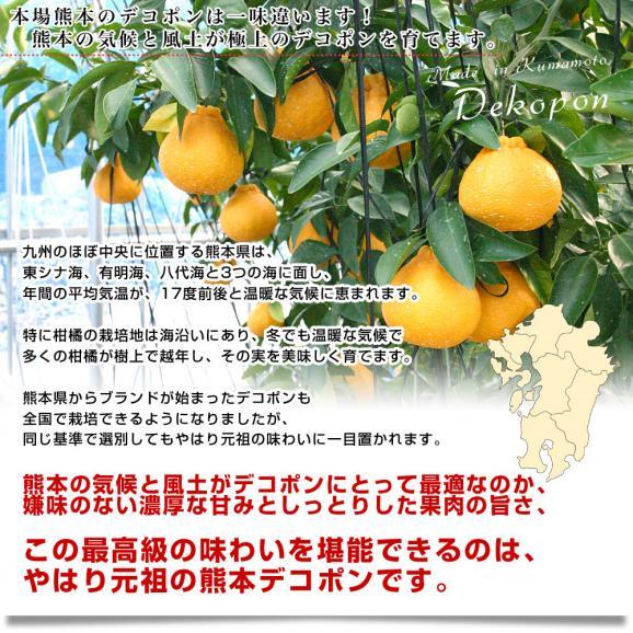 送料無料 熊本県産 JA熊本果実連 貯蔵デコポン 2LからL 3キロ(12玉から15玉) Pプラス鮮度保持袋入り 市場スポット06