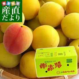 和歌山県産 JA紀州 みなべの南高梅  2Lサイズ 10キロ 梅 梅干 梅干し 梅酒 梅サワー 梅ジャム 市場発送