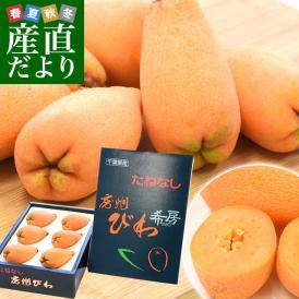 送料無料 千葉県産 JA安房 種子なしびわ 希房 Lから3Lサイズ 約480g化粧箱 5から8粒 市場スポット