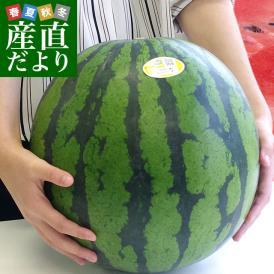 送料無料 熊本県産 JAかもと 大玉スイカ(祭りばやし等) 3Lサイズ 7.5キロ 西瓜 すいか 市場スポット