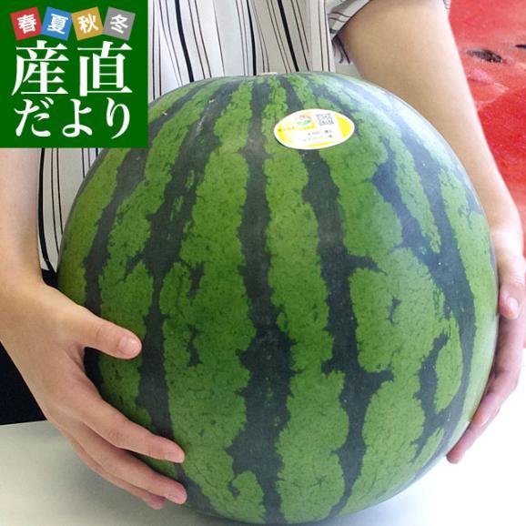 送料無料 熊本県産 JAかもと 大玉スイカ(祭りばやし等) 3Lサイズ 7.5キロ 西瓜 すいか 市場スポット01