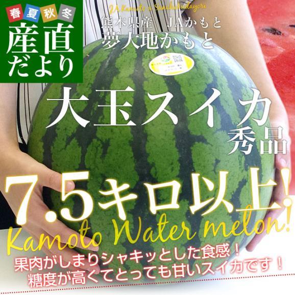 送料無料 熊本県産 JAかもと 大玉スイカ(祭りばやし等) 3Lサイズ 7.5キロ 西瓜 すいか 市場スポット02
