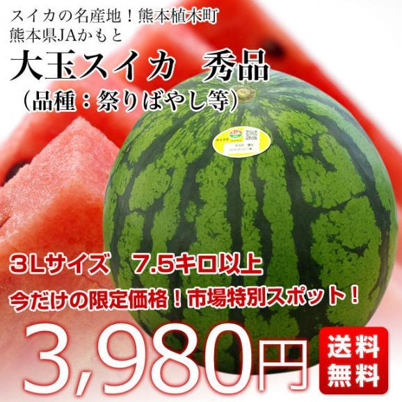 送料無料 熊本県産 JAかもと 大玉スイカ(祭りばやし等) 3Lサイズ 7.5キロ 西瓜 すいか 市場スポット03