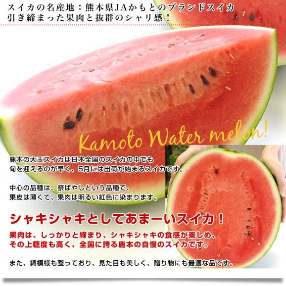 送料無料 熊本県産 JAかもと 大玉スイカ(祭りばやし等) 3Lサイズ 7.5キロ 西瓜 すいか 市場スポット04