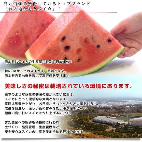 送料無料 熊本県産 JAかもと 大玉スイカ(祭りばやし等) 3Lサイズ 7.5キロ 西瓜 すいか 市場スポット05