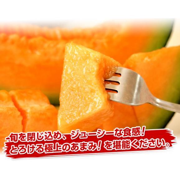 北海道産 JAきょうわ らいでんメロン 赤肉 2玉 1.5キロ前後×2玉 めろん 夏ギフト お中元ギフト04