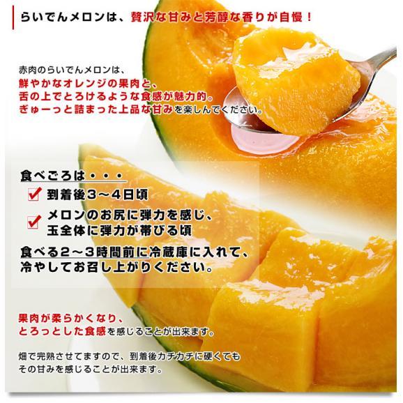 北海道産 JAきょうわ らいでんメロン 赤肉 2玉 1.5キロ前後×2玉 めろん 夏ギフト お中元ギフト05