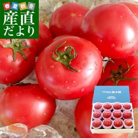 北海道より産地直送 下川町のスーパーフルーツトマト <北の極> プレミアム 約800g化粧箱 LからSサイズ(8玉から15玉)送料無料 とまと