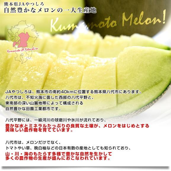 熊本県産 JAやつしろ他 肥後グリーンメロン 優品以上 超盛り 8キロ (約2キロ×4玉) めろん 市場スポット 送料無料05