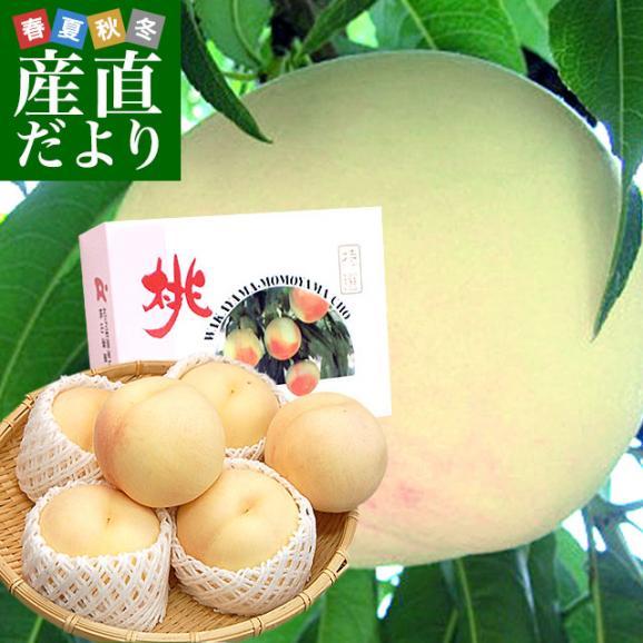 和歌山県より産地直送 JA紀の里 あら川の桃 清水白桃 赤秀品 1.8キロ (6玉から8玉) 送料無料 桃 もも01