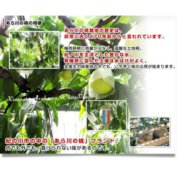和歌山県より産地直送 JA紀の里 あら川の桃 清水白桃 赤秀品 1.8キロ (6玉から8玉) 送料無料 桃 もも06