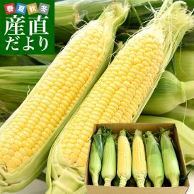 商品名: 送料無料 香川県より産地直送 JA香川県 朝採りゴールドラッシュ Lサイズ 約3.5キロ(12本入)とうもろこし トウモロコシ ※クール便