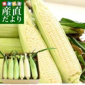 送料無料 香川県より産地直送 JA香川県 朝採りピュアホワイト Lサイズ 約3キロ (12本入) とうもろこし トウモロコシ ※クール便