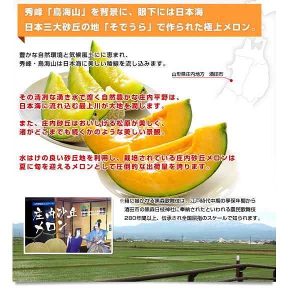 山形県より産地直送 JAそでうら 庄内砂丘メロン 「甘えん坊(青肉)」 3L 大玉2玉(1.5キロ×2玉)送料無料 メロン めろん04