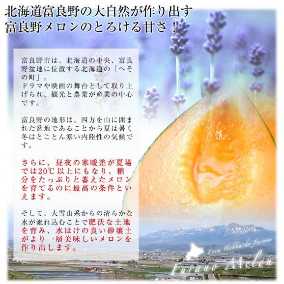 北海道より産地直送 富良野メロン (赤肉)  大玉2玉入り化粧箱 (1.6キロ×2玉) ふらのめろん レッド 送料無料05