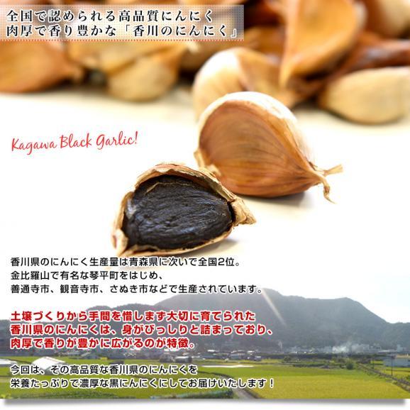 香川県より産地直送 JA香川県 熟成黒にんにく 約300g(タッパー入り) 黒ニンニク 大蒜 送料無料06