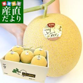 送料無料 北海道から産地直送 富良野メロン 黄美香 8キロ (大玉1.6キロ×5玉) メロン めろん