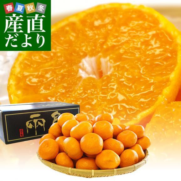 愛媛県より産地直送 JAにしうわ 日の丸みかん 千両 LからSサイズ 5キロ(40玉から60玉) 送料無料 蜜柑 ミカン01
