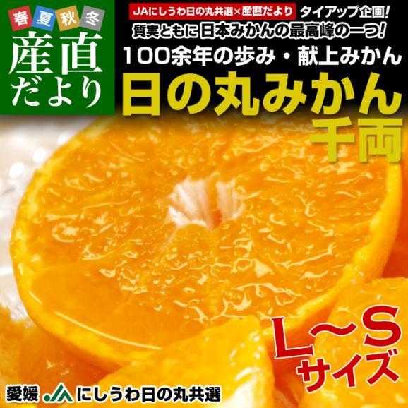 愛媛県より産地直送 JAにしうわ 日の丸みかん 千両 LからSサイズ 5キロ(40玉から60玉) 蜜柑 ミカン 送料無料02