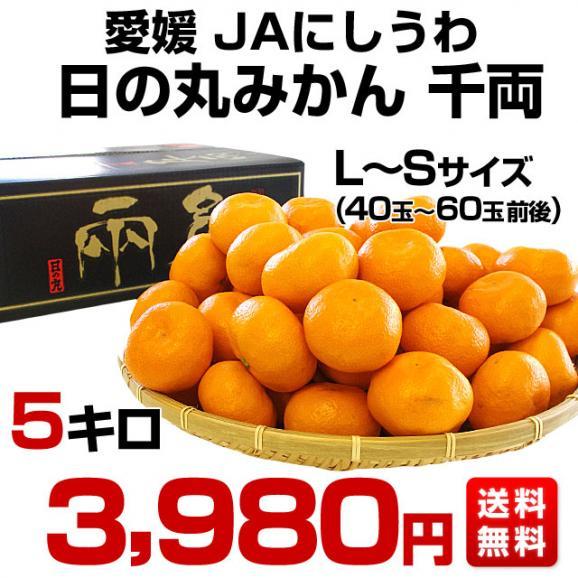 愛媛県より産地直送 JAにしうわ 日の丸みかん 千両 LからSサイズ 5キロ(40玉から60玉) 送料無料 蜜柑 ミカン03