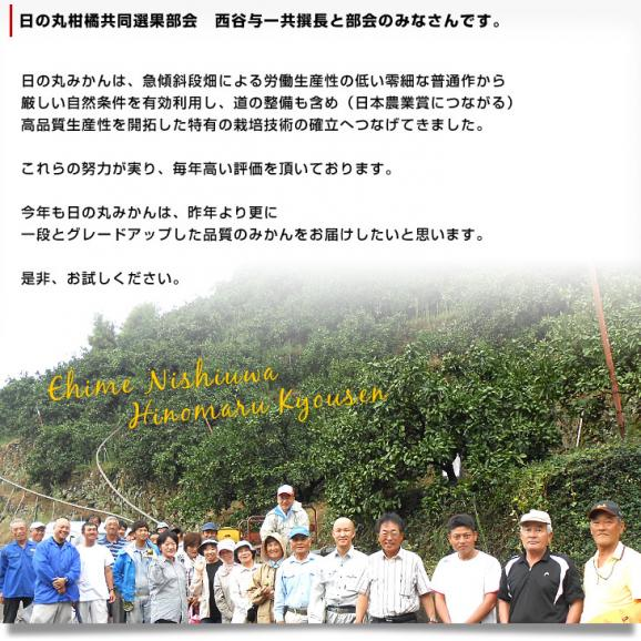 愛媛県より産地直送 JAにしうわ 日の丸みかん 千両 LからSサイズ 5キロ(40玉から60玉) 送料無料 蜜柑 ミカン05