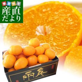 送料無料 愛媛県より産地直送 JAにしうわ 日の丸みかん 千両 LからSサイズ 3キロ(24玉から36玉) 蜜柑 ミカン