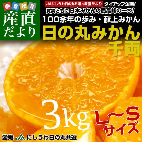 愛媛県より産地直送 JAにしうわ 日の丸みかん 千両 LからSサイズ 3キロ(24玉から36玉) 送料無料 蜜柑 ミカン02