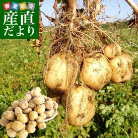 北海道産 JA今金町 じゃがいも 今金男しゃく 2Lサイズ 10キロ 馬鈴薯 男爵 ジャガイモ 芋 ※市場スポット 送料無料
