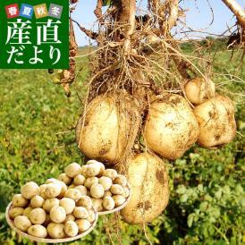 北海道産 JA今金町 じゃがいも 今金男しゃく Lサイズ 10キロ 馬鈴薯 男爵 ジャガイモ 芋 ※市場スポット 送料無料