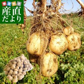 北海道産 JA今金町 じゃがいも 今金男しゃく LMサイズ 10キロ 馬鈴薯 男爵 ジャガイモ 芋 ※市場スポット 送料無料