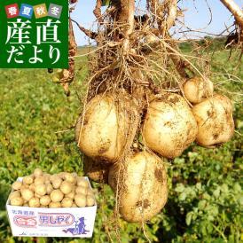 北海道産 JA今金町 じゃがいも 今金男しゃく Mサイズ 10キロ 馬鈴薯 男爵 ジャガイモ 芋 ※市場スポット 送料無料