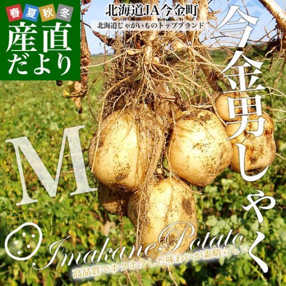 北海道産 JA今金町 じゃがいも 今金男爵 Mサイズ 10キロ 馬鈴薯 ジャガイモ 芋 送料無料 ※市場スポット02