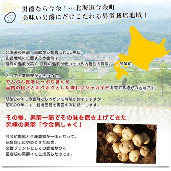 北海道産 JA今金町 じゃがいも 今金男爵 Mサイズ 10キロ 馬鈴薯 ジャガイモ 芋 送料無料 ※市場スポット04