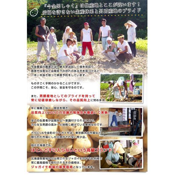 北海道産 JA今金町 じゃがいも 今金男爵 Mサイズ 10キロ 馬鈴薯 ジャガイモ 芋 送料無料 ※市場スポット05