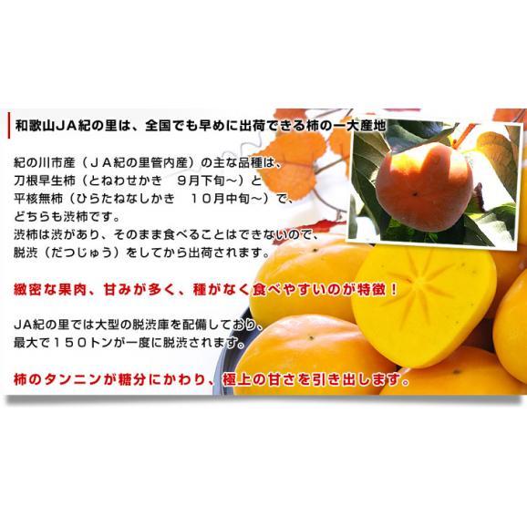 和歌山県より産地直送 JA紀の里 たねなし柿 2LからLサイズ 7.5キロ(32玉から36玉)カキ 刀根柿 平核無柿 とねがき ひらたねなしがき04