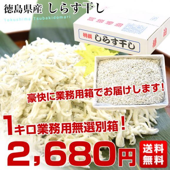 徳島県椿泊産 しらす干し 1キロ入り 業務用箱 シラス  送料無料03