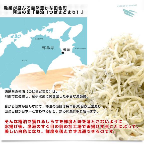 徳島県椿泊産 しらす干し 1キロ入り 業務用箱 シラス  送料無料05