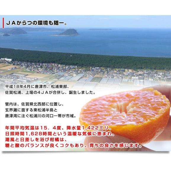 送料無料 佐賀県より産地直送 JAからつ 唐津みかん「からつっ子」 Sから3Sサイズ 2.5キロ (30から50玉前後)06