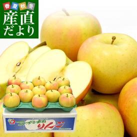 送料無料 青森県より産地直送 JAつがる弘前 トキりんご 「メジャー」 3キロ(小玉 13玉入り)